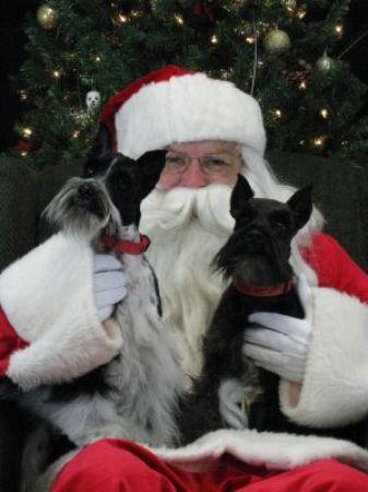 Christmas 2012 Bailey and Cooper